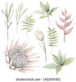 watercolor tropical plants set. watercolor protea. Design for invitation, wedding or greeting cards