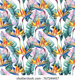 Watercolor tropical seamless pattern with bird-of-paradise flower. Exotic flowers, leaves on white background. Hand painted natural illustration