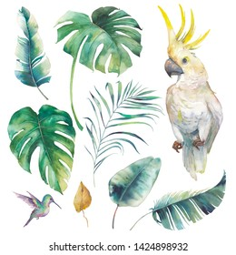 Watercolor tropical set. Isolated objects: parrot, palm tree leaf, banana leaves, monstera, colibri.