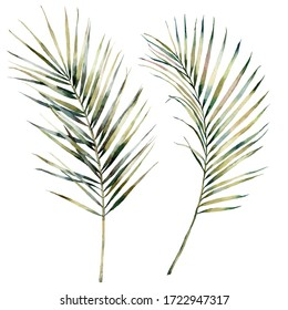 Watercolor tropical set with palm branches. Hand painted exotic leaves isolated on white background. Floral illustration for design, print, fabric or background.
