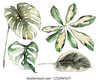 Watercolor tropical set with plants branches and monstera. Hand painted exotic leaves and branches isolated on white background. Floral illustration for design, print, fabric or background.