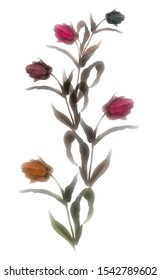 Watercolor tulips digital design. Digital painting.