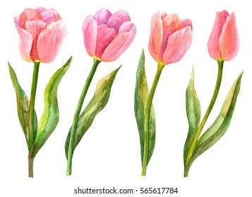 Watercolor tulips set, hand drawn illustration of spring flowers, floral elements isolated on white background.