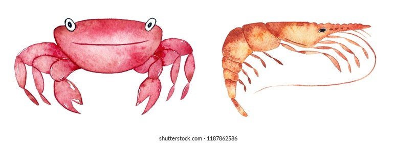 Watercolor underwater crab and shrimp isolated on white background