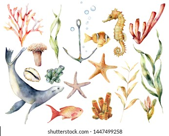 Watercolor underwater wildlife set. Hand painted coral reef, sea lion, tropical fish, anchor, seahorse and laminaria isolated on white background. Aquatic illustration for design, print or background