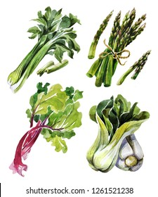 Watercolor vegetable set, organic ingredients. Celery, rhubarb, Bok Choy and Asparagus. Hand draw raw food illustration on white background. Can be used for labels, menus, dishes and for packing seeds