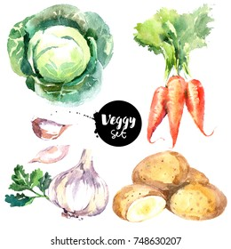 Watercolor vegetables set. Painted isolated natural organic fresh eco food illustration on white background. Veggies design of  carrots, cabbage, garlic, potatoes