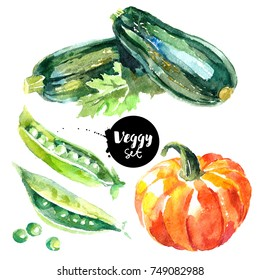Watercolor vegetables set. Painted isolated natural organic fresh eco food illustration on white background. Veggies design of zucchini, pumpkin, peas