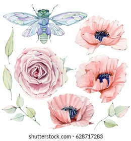 Watercolor vintage floral set. Spring or summer decoration floral bohemian design. Watercolor isolated. There are poppy, wheat, rose,  lavender, cicada. Perfect for invitation, greeting cards.