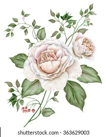 Watercolor vintage image with english roses isolated on white background