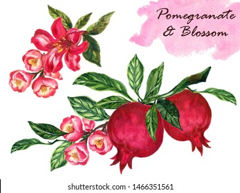 Watercolor vintage pomegranate with branch foliage composition. pomegranate tree isolated on white background botanical illustration for design hand paint