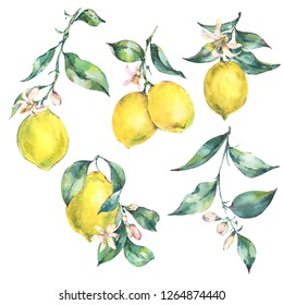 Watercolor vintage set of branch fresh citrus yellow fruit lemon, green leaves and flowers, Natural collection isolated on white background