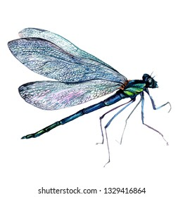 Watercolor Vintage Style Illustration of Green Dragonfly. Detailed Painting of Damselfly with Transparent Wings. Illustration of Insect Anisoptera isolated on White.