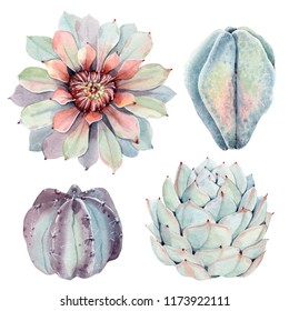 Watercolor vintage succulents set. Spring or summer decoration floral bohemian design.