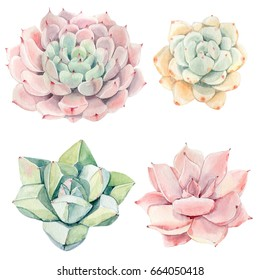 Watercolor vintage succulents set. Spring or summer decoration floral bohemian design. Watercolor isolated. Perfect for invitation, wedding or greeting cards.