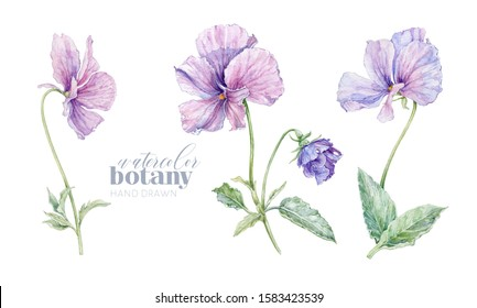 Watercolor violet flower illustration set isolated on white background. Botanical elements can be used for natural cosmetics, women products, packaging, summer background, greeting design