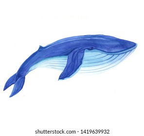 Watercolor whale fish animal illustration isolated on white background