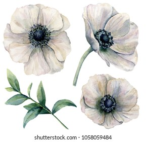 Watercolor white anemone set. Hand painted flowers with eucalyptus leaves isolated on white background. Natural illustration for design, print, fabric or background
