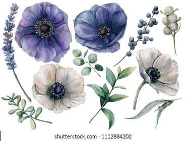 Watercolor white and blue floral set. Hand painted blue and white anemone, brunia berry, eucalyptus leaves, lavender, succulent isolated on white background. Illustration for design, print or fabric