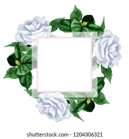 Watercolor white camelia flower. Floral botanical flower. Frame border ornament square. Aquarelle wildflower for background, texture, wrapper pattern, frame or border.