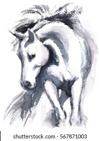 Watercolor White Horse in motion Hand Painted Illustration isolated on white background