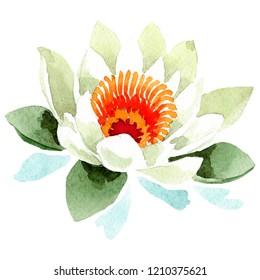 Lotus Frames Images Stock Photos Vectors Shutterstock