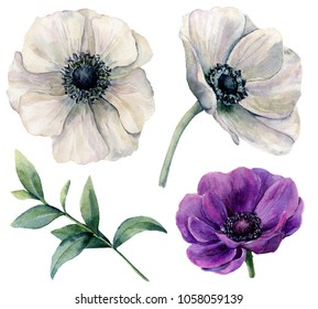 Watercolor white and violet anemone set. Hand painted flowers with eucalyptus leaves isolated on white background. Natural illustration for design, print, fabric or background