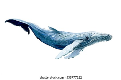 Watercolor white whale isolated on a white background illustration.