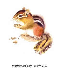 Watercolor Wild Animal Rodent Chipmunk Eating Nuts Hand Drawn Illustration isolated on white background