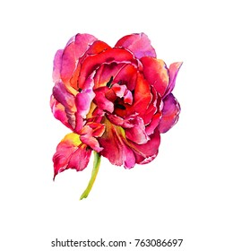 Watercolor wild tropical exotic tulip flowers.Magic colorful plants and leaves.Pink,rose,purple,blue,yellow petals.