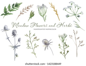 Watercolor wildflowers, herbs, plants, meadow flowers. Flower botanical set on a white background. Great for cards, invitations, greeting cards, weddings, quotes, patterns, bouquets, logos.