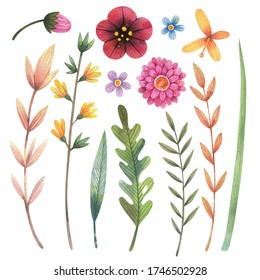 Watercolor wildflowers set with leaves, buds and branches. Illustration is isolated on white background. Daisy, forget-me-not, forsythia flowers. For poster, flower composition, bouquet, wreath.