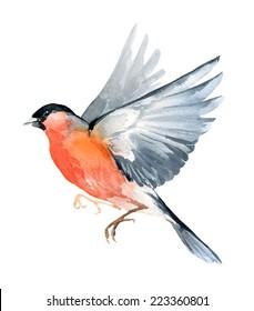 Watercolor wildlife natural winter Christmas robin bird