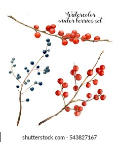 Watercolor winter berries set. Hand painted red and blue winter berries on white background. Botanical illustration for design or print.