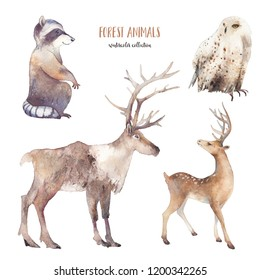 Watercolor winter forest animals. Hand drawn fauna set. Isolated reindeer, polar owl, raccoon on white background.