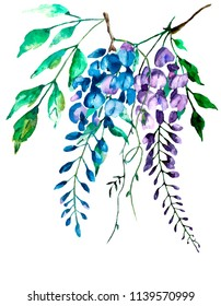 Watercolor wisteria flower, branch isolated on white background. Hand drawn nature painting. Vintage design for greeting card, postcard, poster, collage, wall art, blogs, websites.