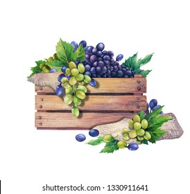 Watercolor wooden box of white and blue grapes decorated with leaves and sackcloth. Hand painted illustration isolated on white background