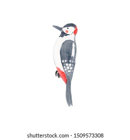 Watercolor woodpecker. Forest bird. Isolated kids illustration. Childish background. Cartoon character on white.
