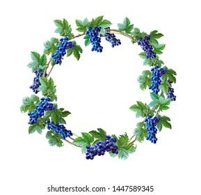 Watercolor wreath of blue grape,green leaves on white background. Vegetarian food drawing. Fresh fruit, natural berry. Watercolour circle frame.Hand painted Botanical illustration.