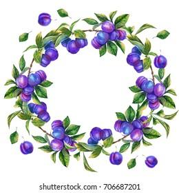 Watercolor wreath, frame of plum branches, berries, harvest, leaves, summer, garden.