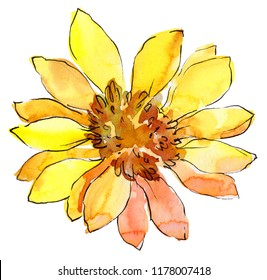 Watercolor yellow african daisy flower. Floral botanical flower. Isolated illustration element. Aquarelle wildflower for background, texture, wrapper pattern, frame or border.