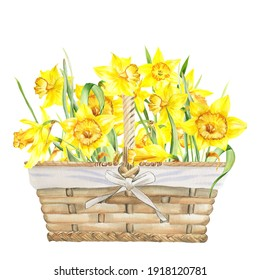Watercolor  yellow daffodils Easter basket. Suitable for greeting cards, easter cards, invitations, birthday, first communion, baptism, spring events