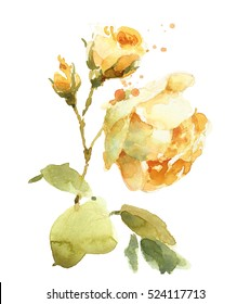 Watercolor Yellow English Garden Roses Flowers Floral Wedding Background Texture Hand Painted Illustration