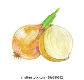 Watercolor yellow onion