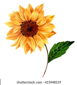 A watercolor yellow sunflower, hand painted in the style of vintage botanical art on white background