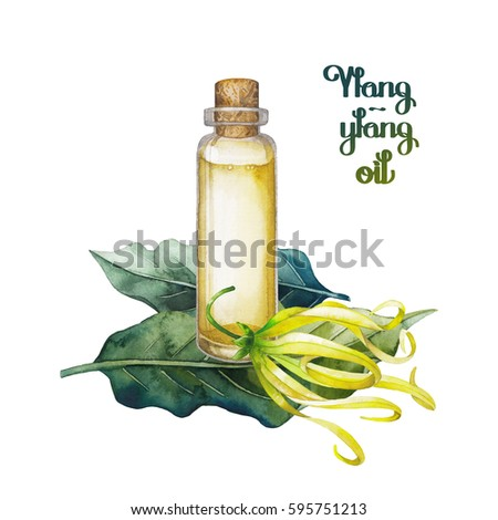Watercolor ylang ylang oil hand painted stock illustration 595751213 watercolor ylang ylang oil hand painted bottle leaves and flowers isolated on white background mightylinksfo