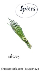 Watercolor young green fresh chives bunch, hand drawn, illustration