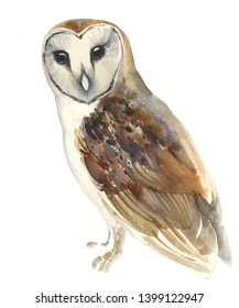 watercolour barn owl sitting and looking