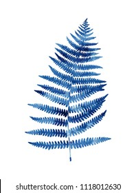 Watercolour fern isolated on white background. Dark blue colour.