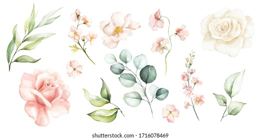 Watercolour floral illustration set. DIY flower, green leaves elements collection - for bouquets, wreaths, arrangements, wedding invitations, anniversary, birthday, postcards, greetings, cards, logo.